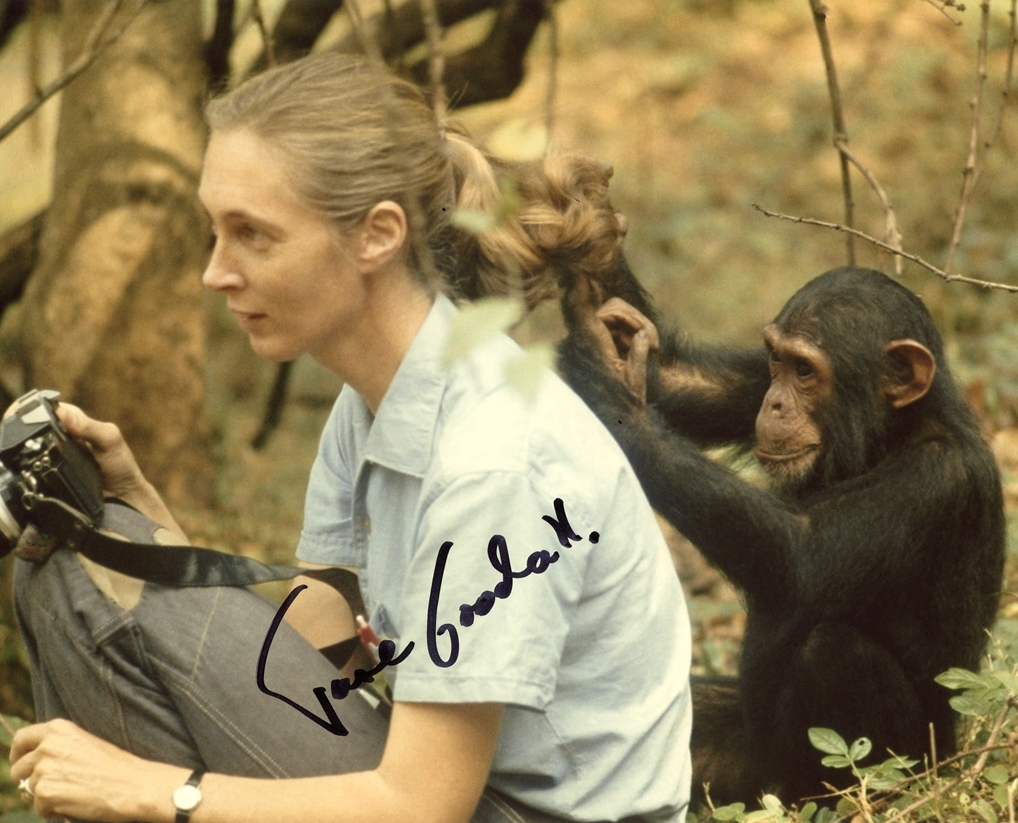 Jane Goodall Signed Photo